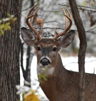 buck 11-9-2018 9-45-56 AM