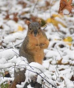 squirrel 11-9-2018 8-56-05 AM